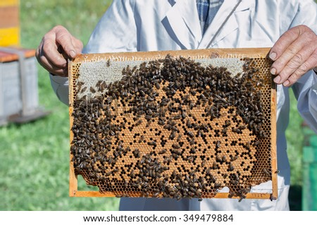 Picture of bees sitting on the frame. Russia, far East, Primorsky Krai