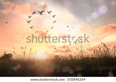 International human solidarity day concept: Silhouette birds flying in shape of heart on meadow autumn sunrise landscape background