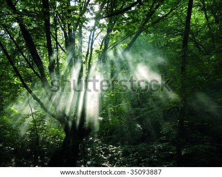 green forest #35093887