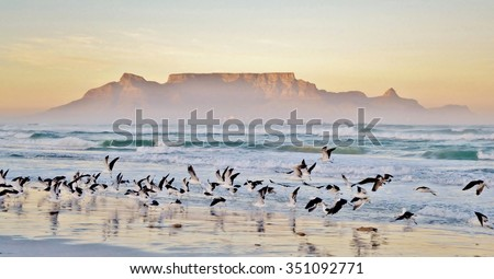 Landscape with beach and Table mountain at sunrise Royalty-Free Stock Photo #351092771