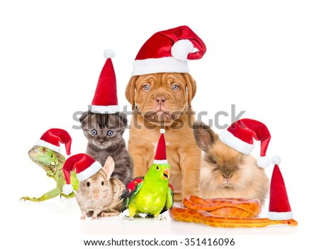 Large group of pets in red christmas hats. isolated on white background. #351416096