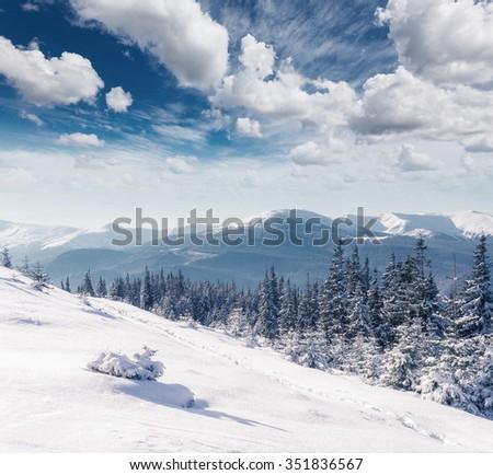 Majestic winter trees glowing by sunlight. Dramatic wintry scene. Location Carpathian national park, Ukraine, Europe. Alps ski resort. Beauty world. Instagram toning effect. Happy New Year! #351836567