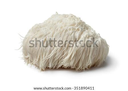 Single Lion's mane mushroom on white background Royalty-Free Stock Photo #351890411