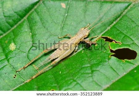 grasshopper #352123889