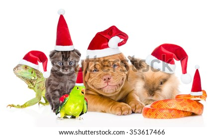 Large group of pets in red Santa hats. isolated on white background #353617466