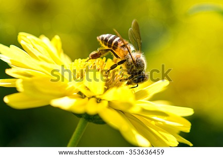 photo of a beautiful bee and flowers a sunny day. #353636459