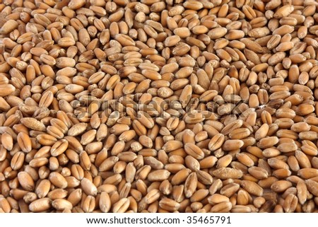 Background from wheat grain #35465791