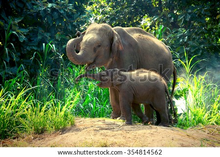 Mother elephant with baby Royalty-Free Stock Photo #354814562