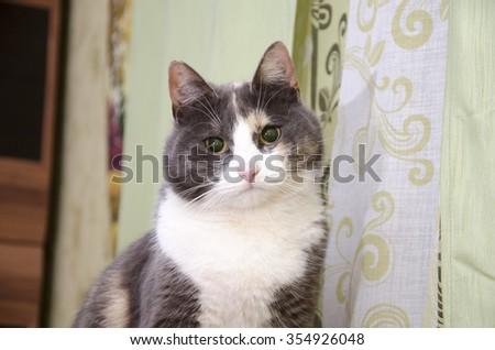 lady-cat #354926048