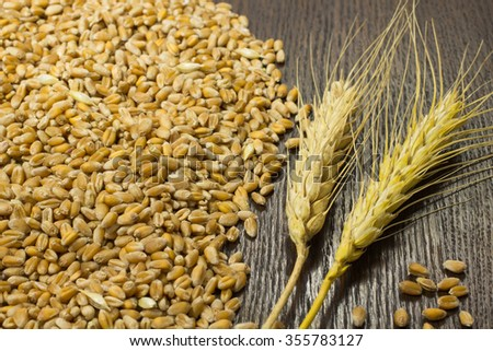 A bunch of wheat and wheat grain on a dark background #355783127