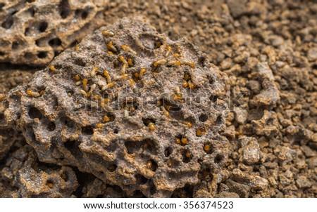 Termite background blur #356374523