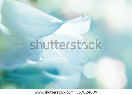 close up of white flower petal, shades of white, teal, soft dreamy image #357024089
