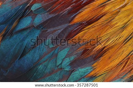 Colorful feathers, chicken feathers background texture Royalty-Free Stock Photo #357287501