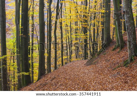 Autumn view from the Swedish national park, Soderasen, with oaks and beeches and their colorful leaves #357441911