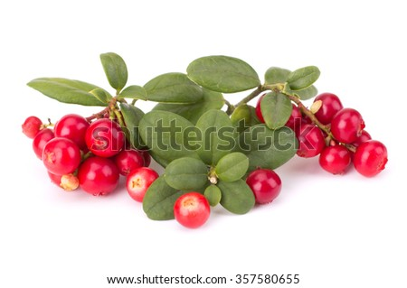 Fresh hand-picked forest Cowberry isolated on white background #357580655