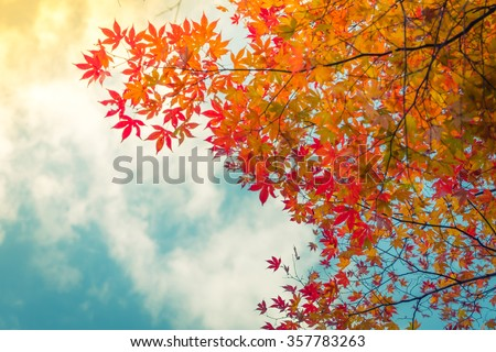 Beautiful Colorful Autumn Leaves ( Filtered image processed vintage effect. ) #357783263