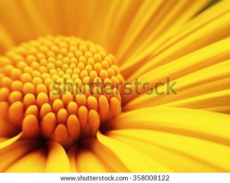 Macro shot yellow flower background #358008122