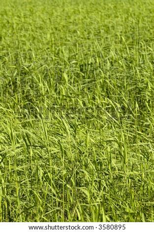 Blades of grass #3580895