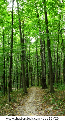 green forest #35816725