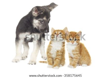 puppy and kitten together #358175645