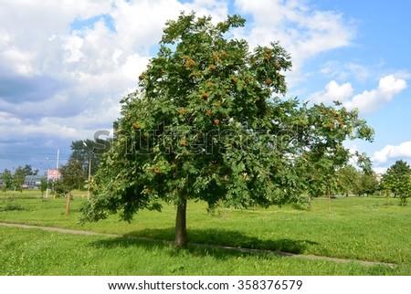 summer tree  #358376579
