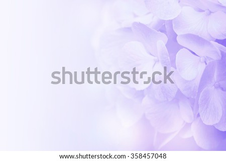 flower on soft pastel color in blur style #358457048