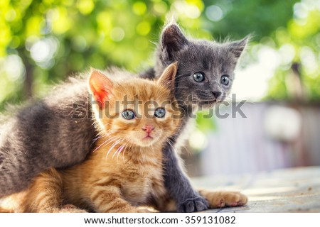 Two adorable kittens playing together.Kittens outdoor. #359131082