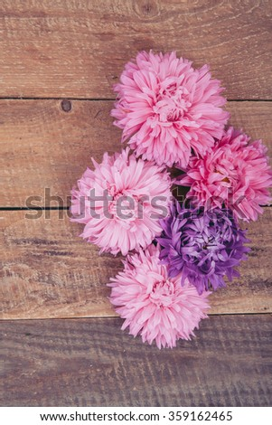 aster on a white background #359162465