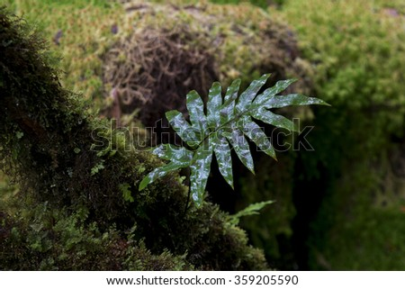 Chiang Mai, Thailand - Sep.14, 2015: Nature in the jungle