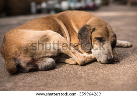 Homeless abandoned brown dog sleeping on the street #359964269
