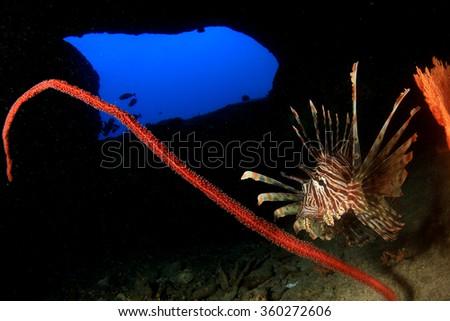 Lionfish underwater cave #360272606