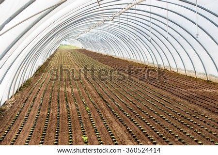 Eco greenhouse #360524414