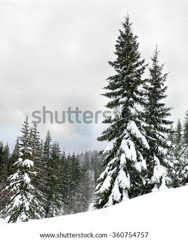 Winter fir forest during snowfall #360754757