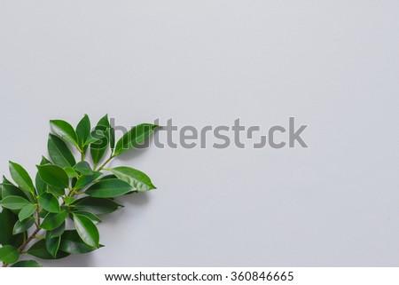 green background #360846665