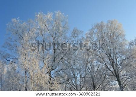 winter trees #360902321