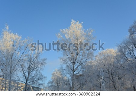 winter trees #360902324