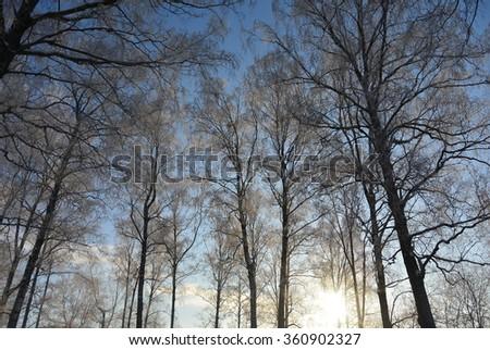 winter trees #360902327