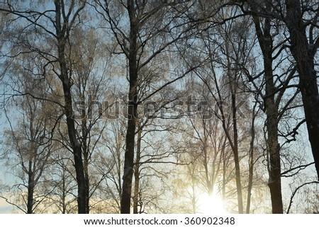 winter trees  #360902348