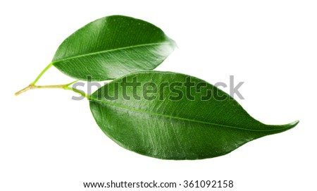 Green leaf isolated on white #361092158