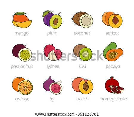 Fruits color icons set. Realistic sliced tropical and summer fruits. Grocery store and restaurant menu symbols. Peeled lychee and cutted in half apricot with seed. Isolated color raster illustrations