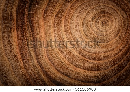 stump of oak tree felled - section of the trunk with annual rings  Royalty-Free Stock Photo #361185908