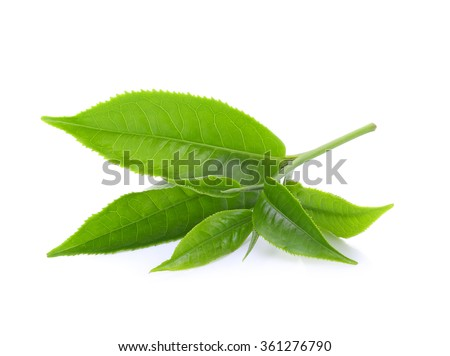 green tea leaf isolated on white background #361276790