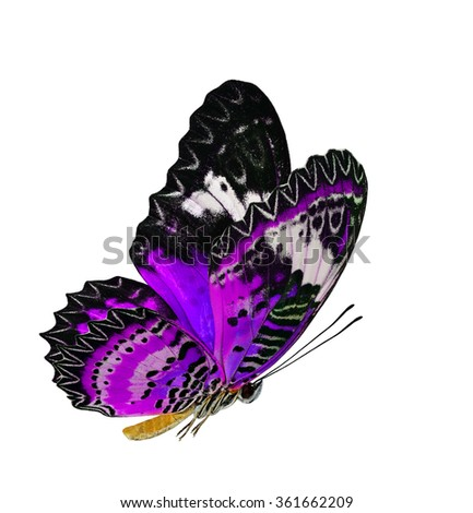 Beautiful flying purple butterfly, the Leopard Lacewing butterfly (Cethosia cyane) in fancy color profile isolated on white background, exotic flying butterfly #361662209
