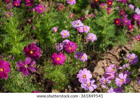 Flower #361849541