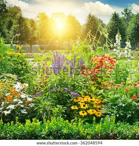 Multicolored flowerbed in park. Sunrise. #362048594