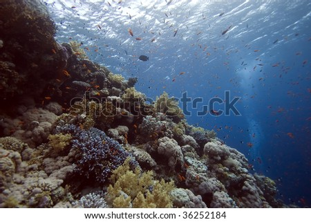 coral and fish #36252184