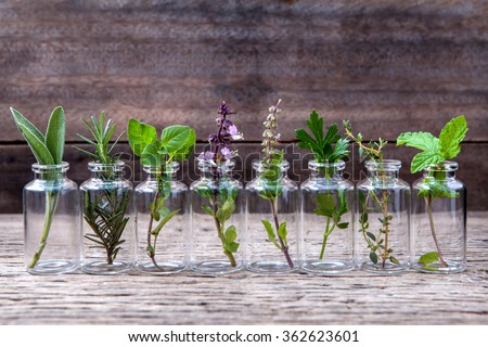 Bottle of essential oil with herbs holy basil flower, basil flower,rosemary,oregano, sage,parsley ,thyme and mint set up on old wooden background . #362623601