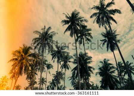 Coconut palm trees farm in Koh Mak island Thailand - Vintage light leak filter effect
