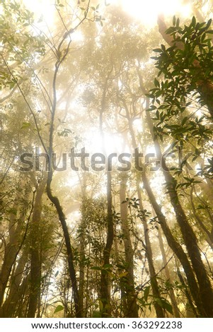 Forest, Morning warm tone #363292238