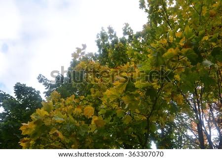yellow autumn #363307070
